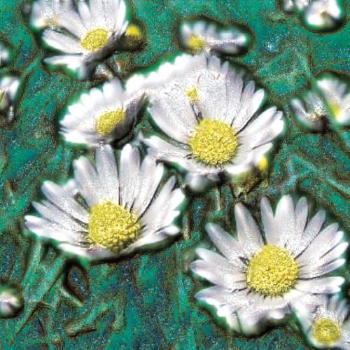 "Chamomile Maroc Essential Oil: ""The Path"""