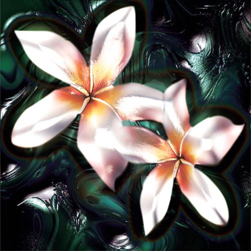"Frangipani Essential Oil: ""The Silver Lining"""