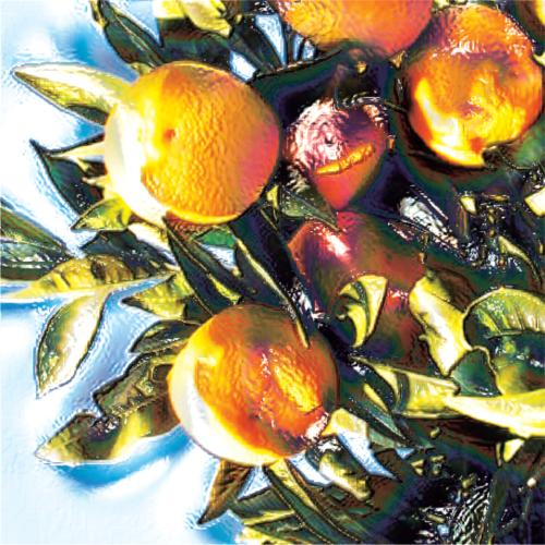 "Mandarin Essential Oil: ""The Innocent"""