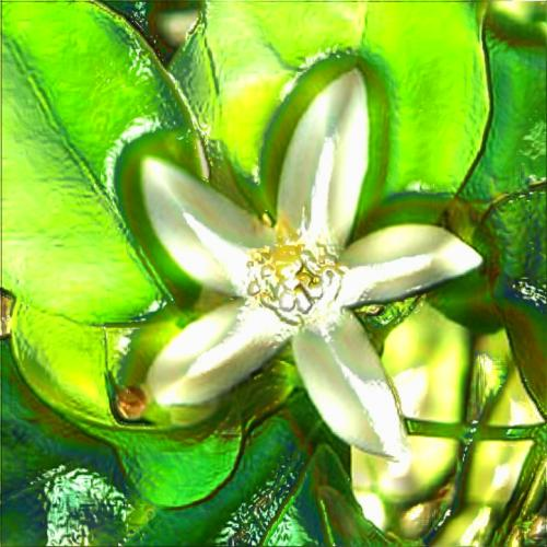 "Neroli Essential Oil: ""Hope"""