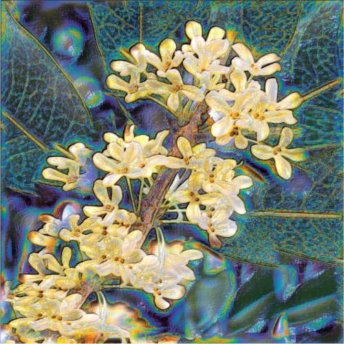"Osmanthus Essential Oil: ""New Beginnings"""