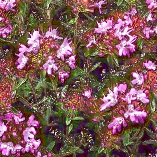 "Red Thyme Essential Oil: ""The Sargeant"""