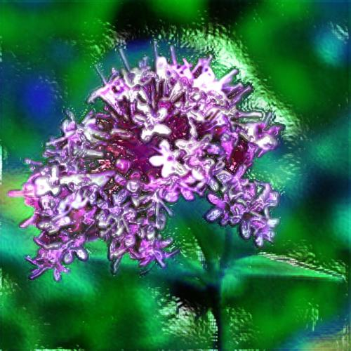 "Valerian Essential Oil: ""The Confessor"""